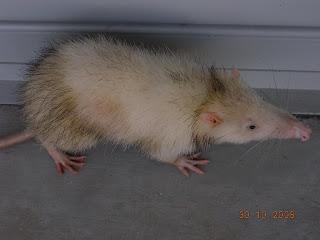 possum quiz 2