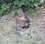 slimme eekhoorns 1