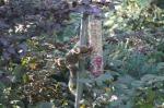 slimme eekhoorns 3