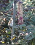 slimme eekhoorns 4