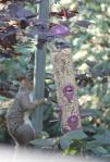 slimme eekhoorns 5